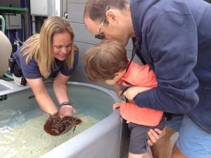 Una empleada del acuario muestra el cangrejo herradura.