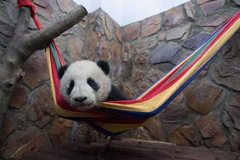 Documental pandas